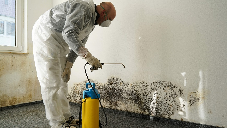 professional black mould removal